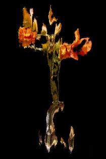 Lily Distortion 191R von Thom Gourley