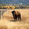 Dsc-3442-buffalo