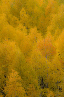 Aspen Splendor by Barbara Magnuson & Larry Kimball
