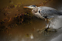 Heron in Shallow Water by Eye in Hand Gallery