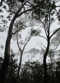 A Walk in the Clouds #1 von Kitsmumma Fine Art Photography
