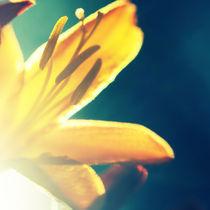 Lensbaby Sunshine JuJu von Jason swain