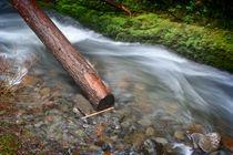 Oneonta-falls-log