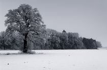 Frosty trees on a foggy morning. by Tom Hanslien