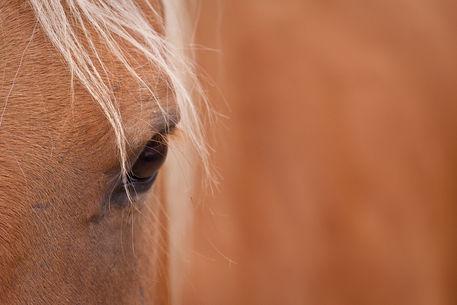 Pony-1-of-1