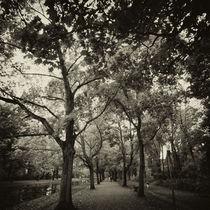 Autumn Avenue by Daniel Hachmann