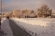 Early Morning Walk In the Snow by Richard Winn