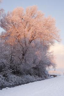 Winter Dawn Light by Richard Winn