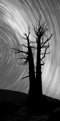 Dead Tree Star trails by Ben Bolden