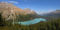 Peyto Lake von Ben Bolden
