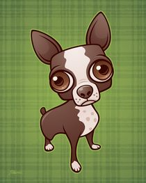 Zippy the Boston Terrier  by John Schwegel