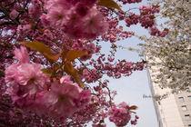 cherry tower von Brian Wallace