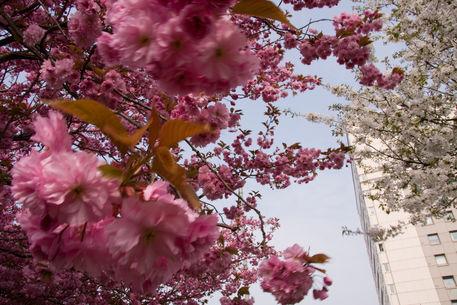 Cherry-tower