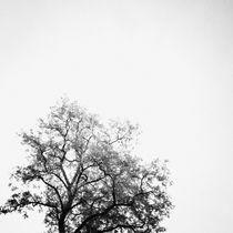 Zen by Daniel Hachmann