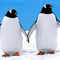 Gentoo-penguins-6723