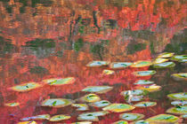Homage to Monet in a Japanese Garden 2 von Lee Rentz