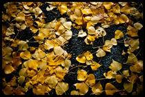 Autumn Leaves by Sydney Sullivan