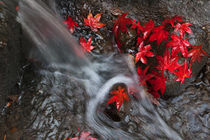 Falling Water and Fallen Leaves von Lee Rentz
