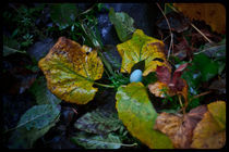 Robin's Egg Blue by Sydney Sullivan