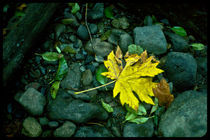 Lone Leaf by Sydney Sullivan
