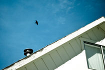 Crow Season by Sydney Sullivan