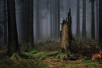 Stumpf von Evgeny Dryakhlov