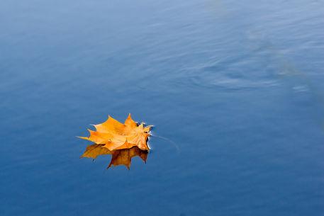 Yellow-leaf-reflection
