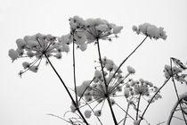 snow von Darius Norvilas