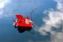red leaf von Darius Norvilas
