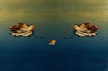 three leaves  von Darius Norvilas
