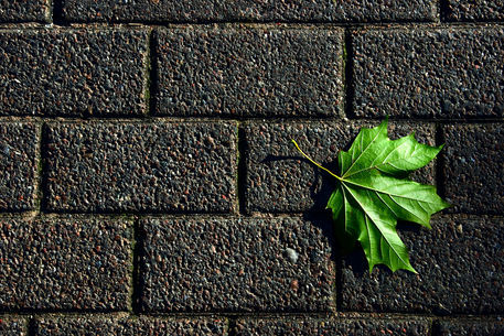 Wall-green-leaf