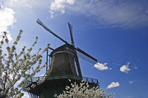 windmill in spring von Darius Norvilas