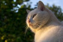 White cat on window ledge von Graham Hughes