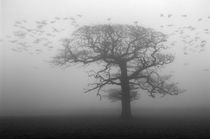 Oak Tree and Crows by Craig Joiner