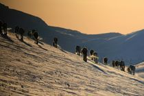 Reindeers crossing mountains by Bente Haarstad