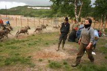 Southsami reindeer herders in Mid-Norway von Bente Haarstad