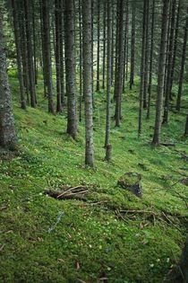 Green forest by Bente Haarstad