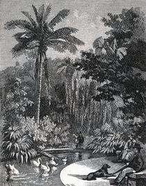Public Park of Rio de Janeiro, 1879 by Laeti Images