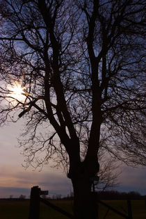 Tree Silhouette Sunset von Ian C Whitworth