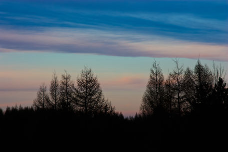 Hilltop-trees-silhouette