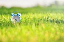 SPRING TIME! von FARHAD DAUD