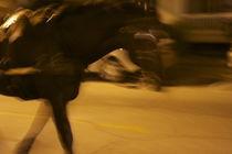 fantôme cheval   by ushkaphotography