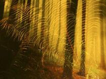 Fern forest von Ryner A