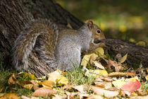 Squirrel in the park by Vladimir Gramagin