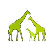 Giraffe family von Ipso Imago