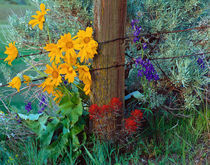 Old Fence in Spring von Leland Howard