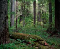 Cd22kaniksu-forest-light