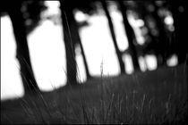 Foggy Memories 15 von Marin Drazancic