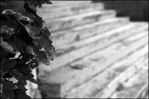 Foggy Memories 14 von Marin Drazancic