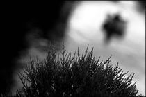 Foggy Memories 13 von Marin Drazancic